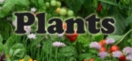 Plants themes for preschool and kindergarten