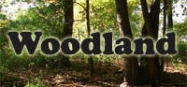 Woodland animals preschool and kindergarten themes